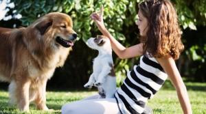 Training für das Kind-Hund-Team