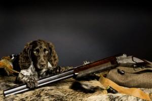 Hund geht jagen