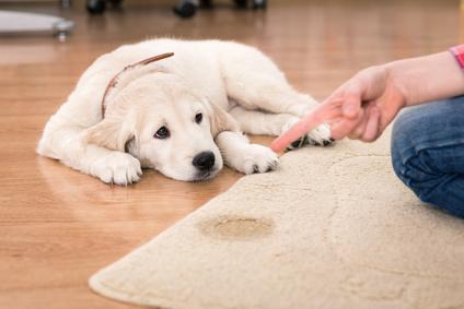 Hund stubenrein bekommen